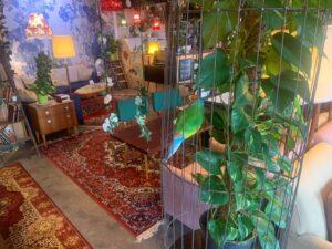Espace décoré avec des luminaires, plantes et tapis